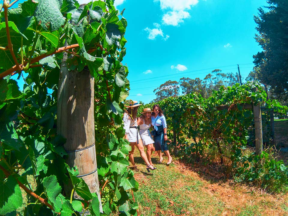 Hens Winery Tours Yarra Valley
